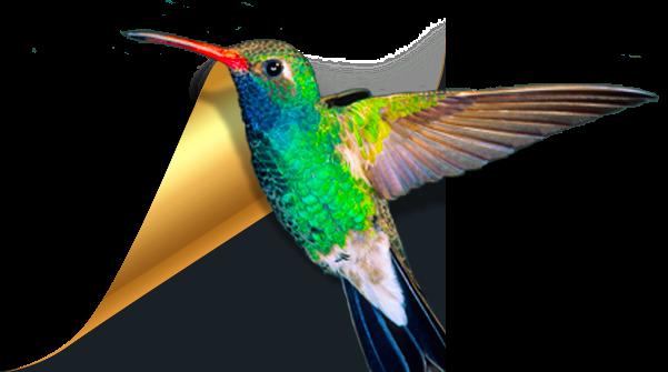 小鸟壁纸视频壁纸电脑版